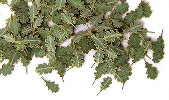 Plusmodel Oak Leaves  1:35
