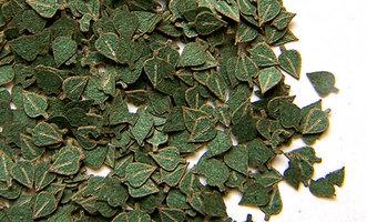 Plusmodel Birch Leaves 1:35